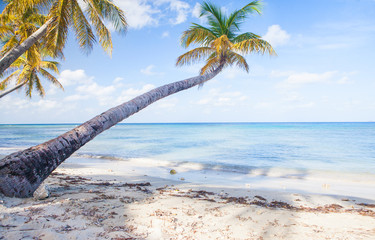 Tuinposter Palm boom Caribbean Mustique Island one of the Grenadines tropical beach with palm trees and turquoise ocean water