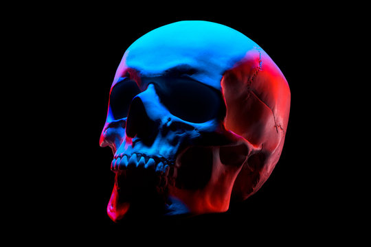 Side view of gypsum model of the human skull in neon lights isolated on black