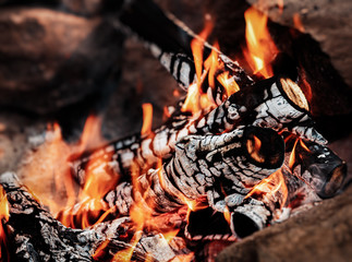 Door stickers Firewood texture Wood fire with ash, сloseup