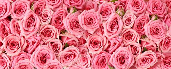 Keuken foto achterwand Roses Background image of pink roses. Top view of rose flowers. Studio shot of flowers.
