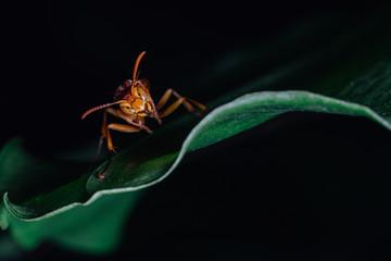 hornet on leaf