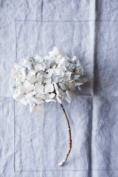Delicate dried flowers