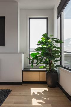Indoor potplant