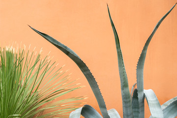 An agave plant next to an orange wall