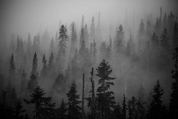 Scenic views of the temperate rainforest with mist and low cloud