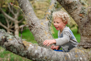 Curly haired boy climbing a tree