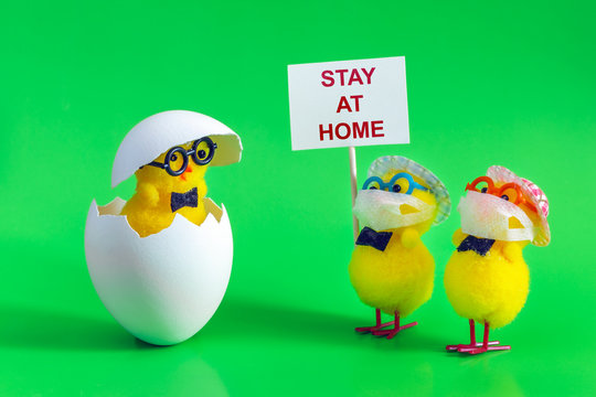 Chickens in masks with a sign stay at home meet the hatched chicken. The concept of protection against coronavirus covid-19