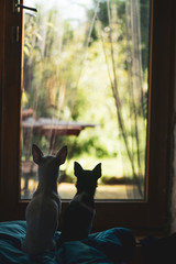 two tiny dogs sit and look out door glass into sunny garden
