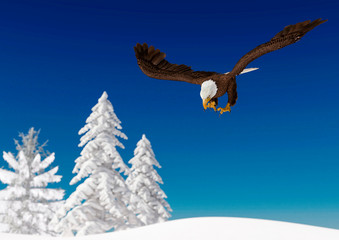 Fototapete - bald eagle is hunting and diving on white snow
