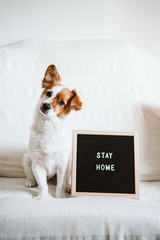 cute jack russell dog on the sofa with letter board with STAY HOME message. Pandemic coronavirus...
