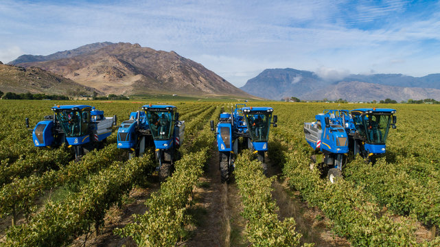 Aerial photo of grape harvesters harvesting grapes in the cape winelands in south africa