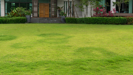 Fototapeta Fresh green grass smooth lawn with bush, trees on the background, good maintenance landscapes in a garden