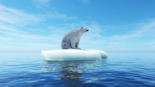 Polar bear concept