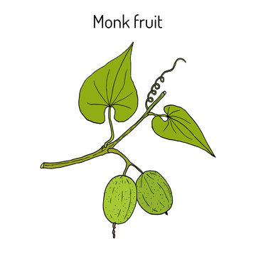 Monk fruit or luo han guo Siraitia grosvenorii , medicinal plant
