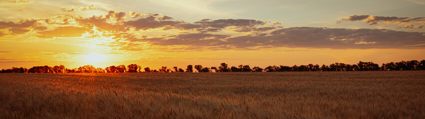 Garden Poster Culture Sunset over the field at golden hour beautiful summer landscape web banner panoramic