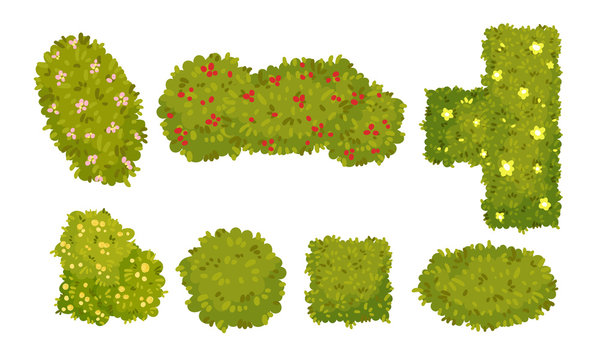 Shaped Green Bushes Planted in Parks and Gardens Above View Vector Set