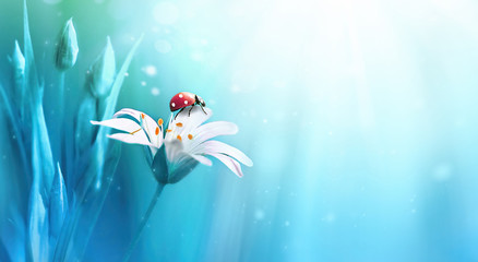 Wall Mural - Beautiful white forest flower with buds and ladybug on blue background in rays of light macro in nature spring or summer. Exquisite graceful easy airy magic artistic wildlife image.