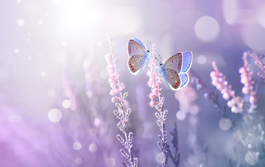 Wall Mural - Amazing beautiful colorful natural scenery. Lavender flowers and two butterfly in rays of summer sunlight in spring outdoors on nature macro, soft focus. Atmospheric photo, gentle artistic image.