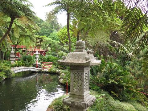 Madeira botanischer, japanischer, garten,