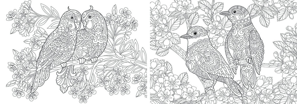 Coloring pages. Couple of lovely birds in floral garden.