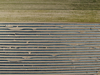An aerial picture shows an asparagus field near Dormagen