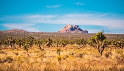 Wall Mural - Mojave Desert Scenery