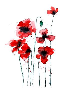 Stylized poppy flowers illustration. Red flowers, watercolor illustration.