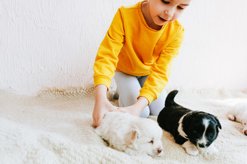 Adorable kid playing with her pets at the carpet in the room. Cropped image of child playing at home with little dogs. Little girl cares about the puppies. Adoption of animal shelter concept.