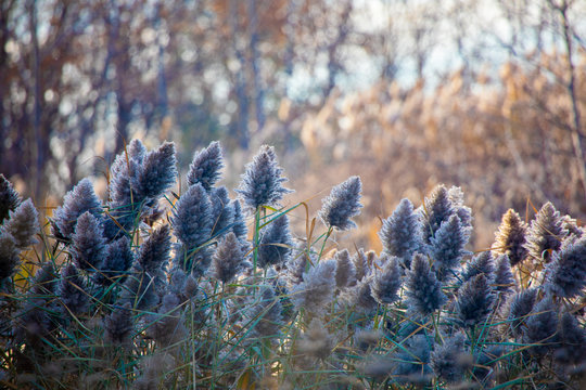Local Park Wispy Grasses Rise and Grow in Forest of Autumn Colours