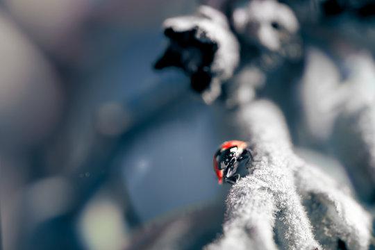 cold mood ladybug