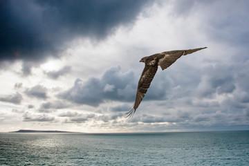 Cooper's Hawk by the Sea
