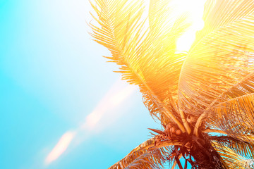 Fototapete - Tropical palm tree on sunset sky cloud abstract background.