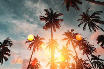 Fototapete - Copy space of tropical palm tree with sun light on sky background.