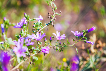 Wall Mural - Colorful wild flowers, natural background