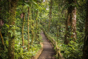 Foto auf Leinwand Straße im Wald chemin au milieu de la forêt tropical que costa rica