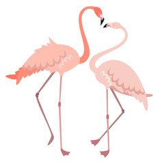 Tuinposter Flamingo Male and female flamingo. Pink birds in flat style isolated on white background.