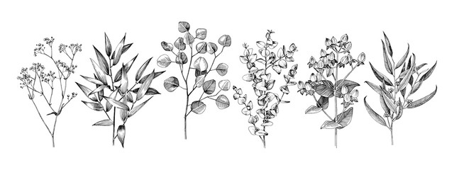 Set of hand drawn flowers, leaves and branches. Fototapete