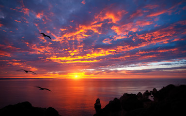 Stunning sunrise over the ocean with beautiful red clouds and silhouettes of birds flying towards the sun