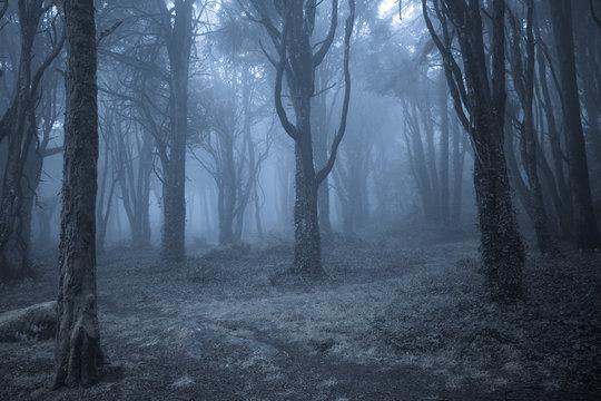 Spooky misty foggy dark forest at night