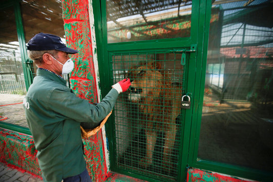 Jamal Yusuf Ali, a zoo keeper who volunteered to stay with animals, wearing a protective face mask, feeds a lion, during a curfew which was imposed to prevent the spread of the coronavirus disease (COVID-19), in Erbil