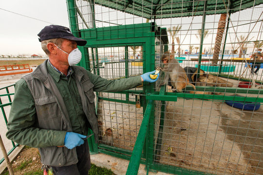 Jamal Yusuf Ali, a zoo keeper who volunteered to stay with animals, wearing a protective face mask and gloves, feeds a monkey, during a curfew which was imposed to prevent the spread of the coronavirus disease (COVID-19), in Erbil