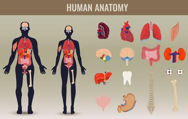 Human internal organs icons set. Human anatomy concept. Vector