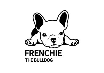Cute lazy french bulldog lies down on the floor. Design in black & white style.