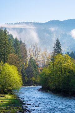 mountain river on a misty sunrise. gorgeous landscape with fog rolling above the trees in fresh green foliage on the shore in the distance. beautiful countryside in morning light