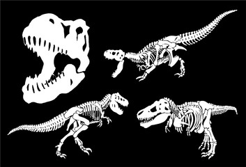 Graphical set of dinosaurs isolated on black background,vector illustration,paleontology Wall mural
