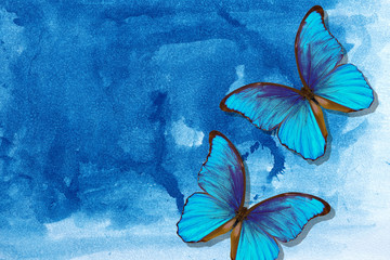 Fototapeten Schmetterlinge im Grunge Bright morpho butterflies on abstract blue watercolor background. Wet watercolor paper texture background. blue watercolor stains.