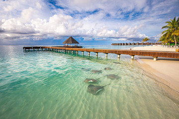 Fantastic beach landscape with sting rays and sharks in green blue lagoon in luxury island resort...