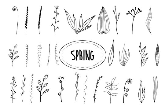 Twigs, leaves. Isolated graceful plants for design. Set of black vector illustrations on a white background.