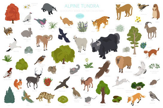 Apine tundra biome, natural region isometric infographic. Terrestrial ecosystem world map. Animals, birds and plants design set