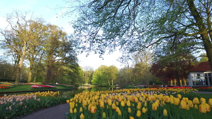 Foto auf Gartenposter Tulpen Keukenhof in holland with al lot of tulps